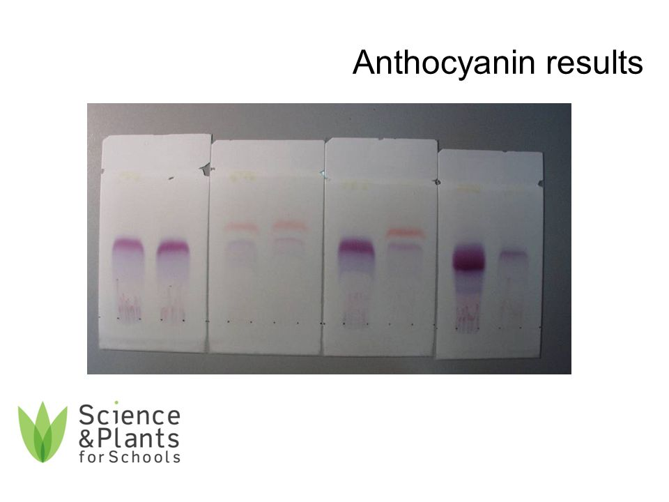 Anthocyanin results