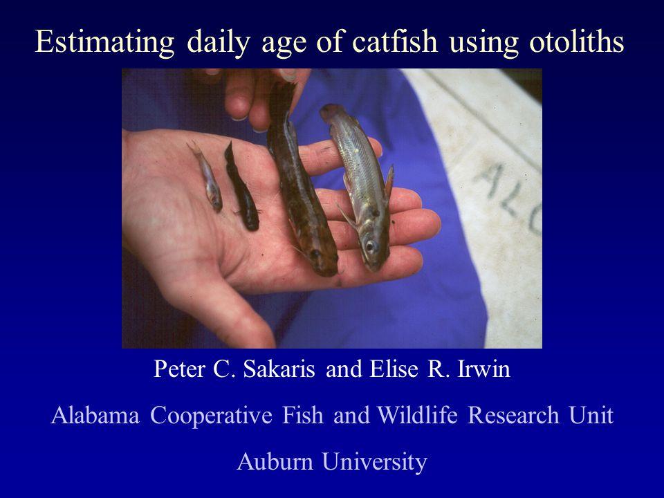 Estimating daily age of catfish using otoliths Peter C.