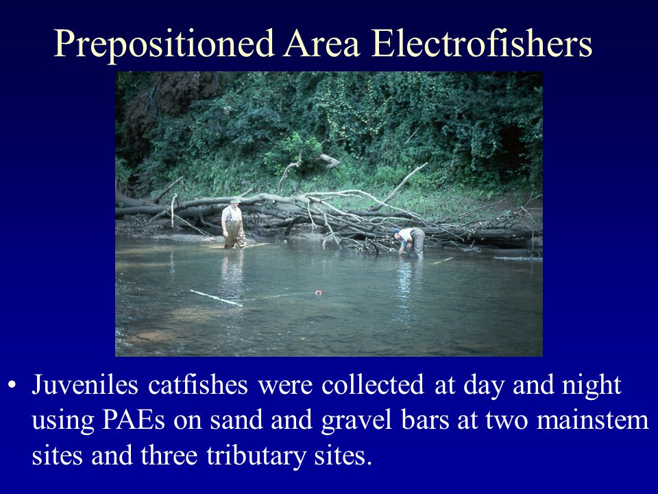 Prepositioned Area Electrofishers Juveniles catfishes were collected at day and night using PAEs on sand and gravel bars at two mainstem sites and three tributary sites.
