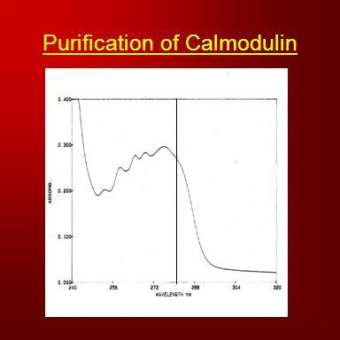 Purification of Calmodulin