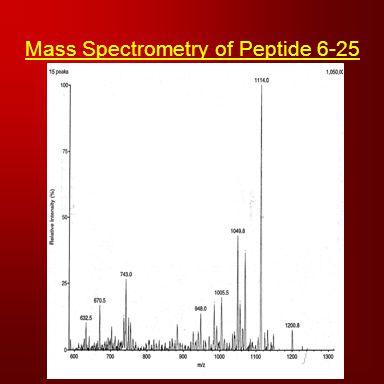 Mass Spectrometry of Peptide 6-25