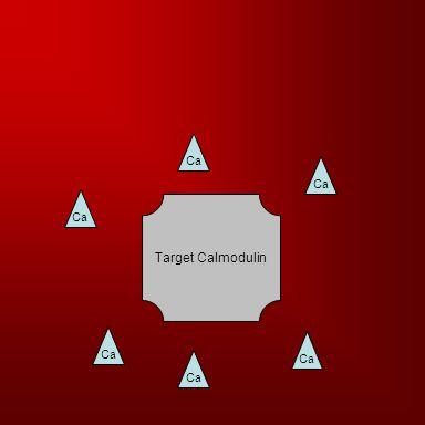 Target Calmodulin Ca