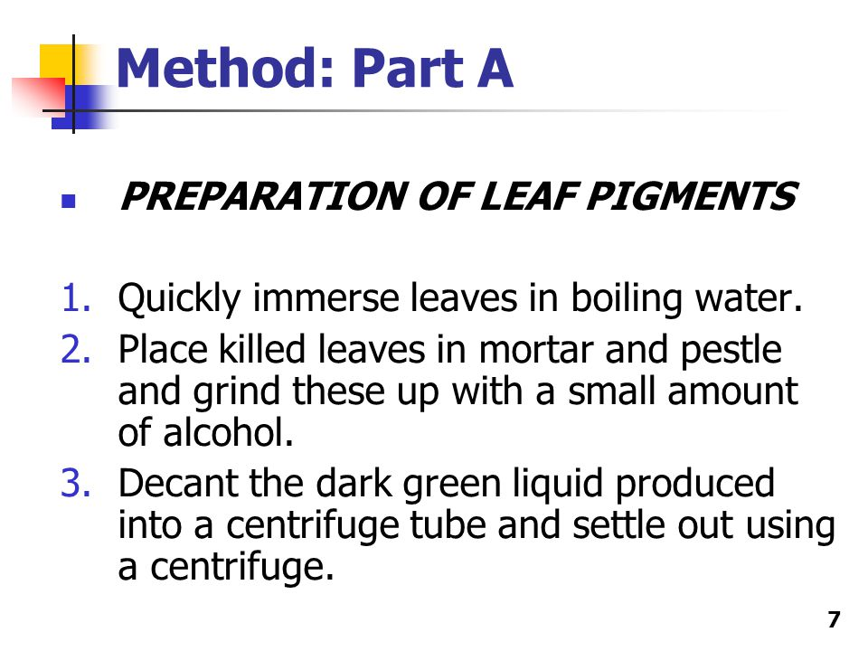 7 Method: Part A PREPARATION OF LEAF PIGMENTS 1.Quickly immerse leaves in boiling water.