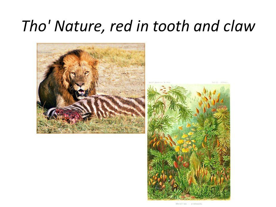 Evolution of anti-herbivore defenses