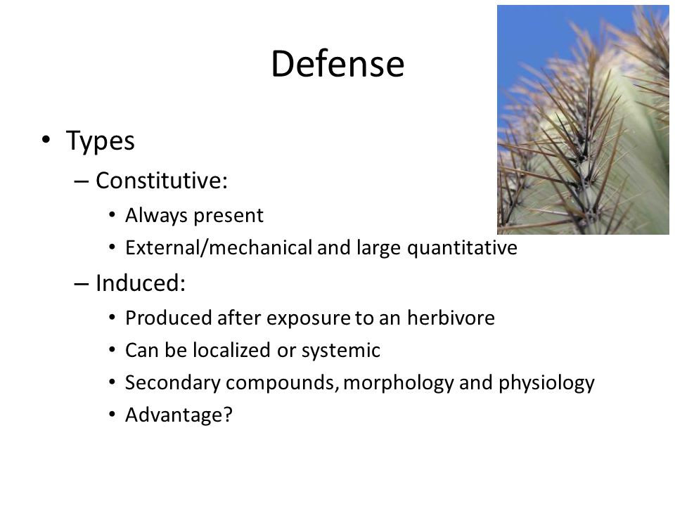 Defense Types – Constitutive: Always present External/mechanical and large quantitative – Induced: Produced after exposure to an herbivore Can be localized or systemic Secondary compounds, morphology and physiology Advantage?