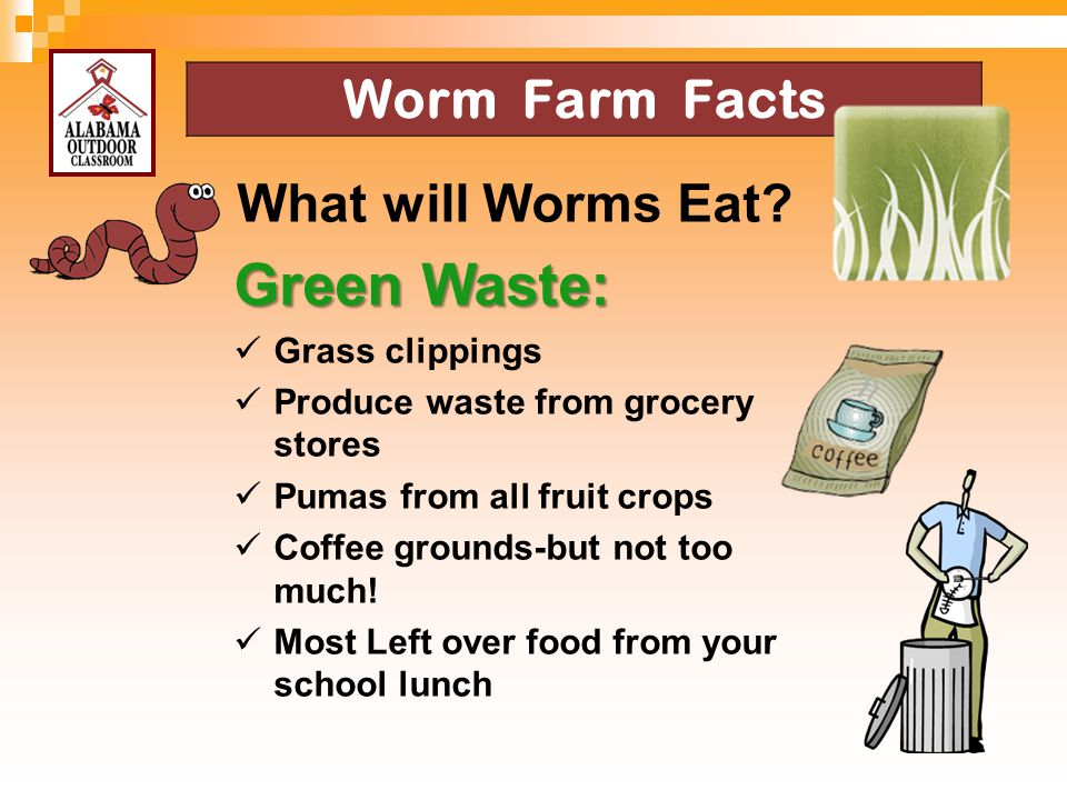 Worm Farm Facts What will Worms Eat? Green Waste: Grass clippings Produce waste from grocery stores Pumas from all fruit crops Coffee grounds-but not