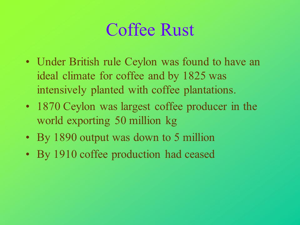 Coffee Rust Under British rule Ceylon was found to have an ideal climate for coffee and by 1825 was intensively planted with coffee plantations.