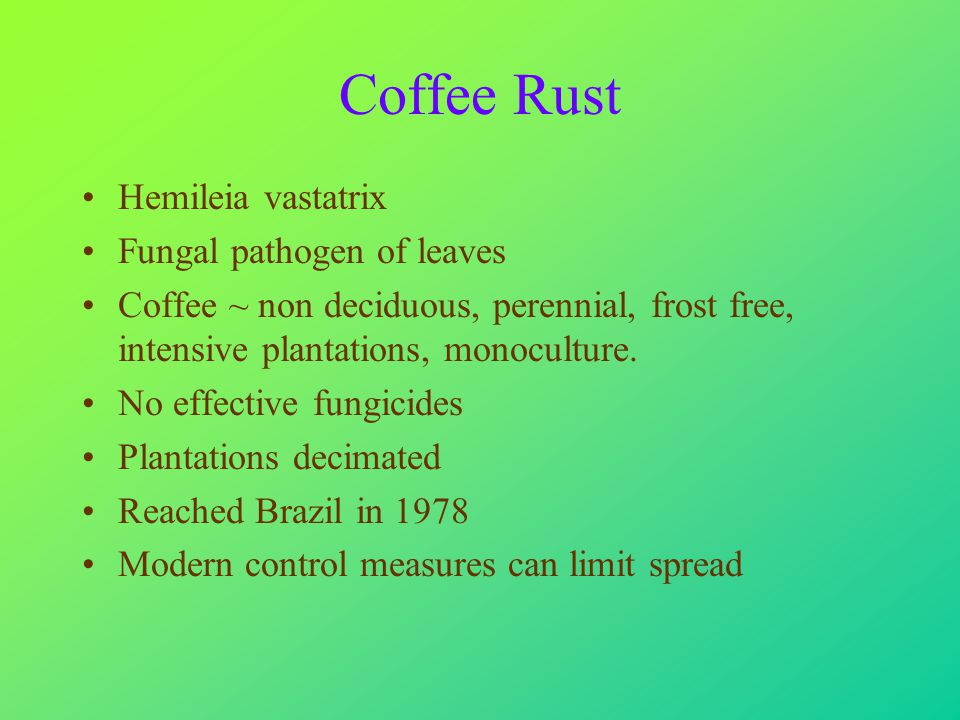 The Coffee Tree Coffea arabica Self fertile, tetraploid Small tree to 5m in understorey of upland forests ~ 2,000m altitude near equator In cultivation usually pruned to a bush Frost sensitive, temperatures not too cold or too hot,