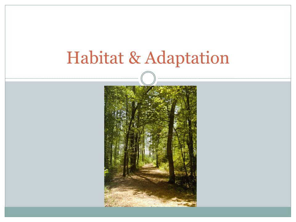 Habitat & Adaptation