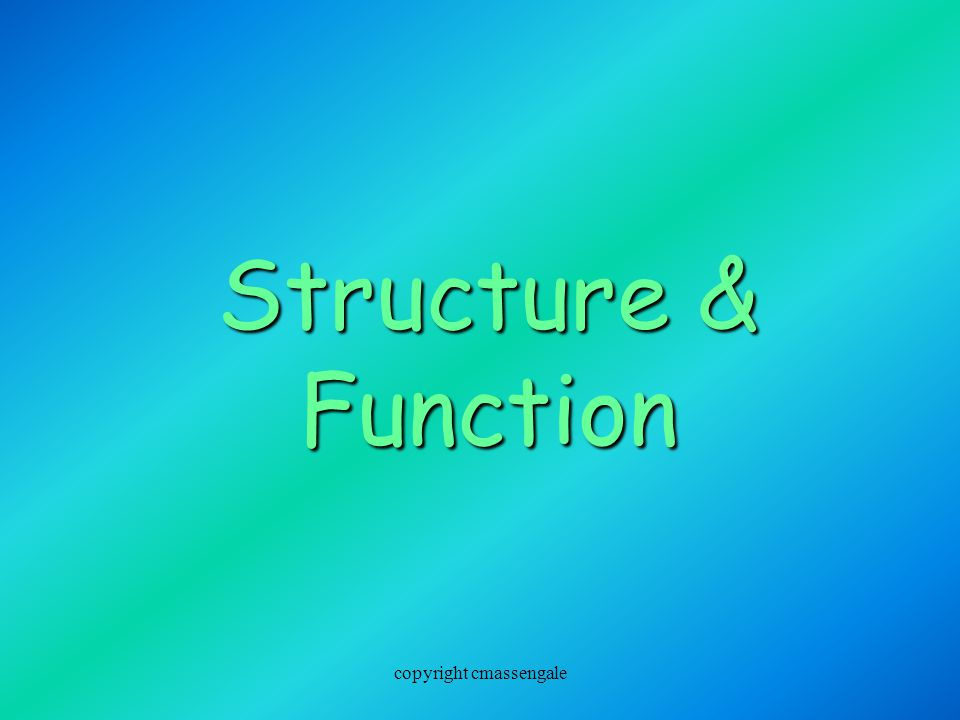 Structure & Function copyright cmassengale