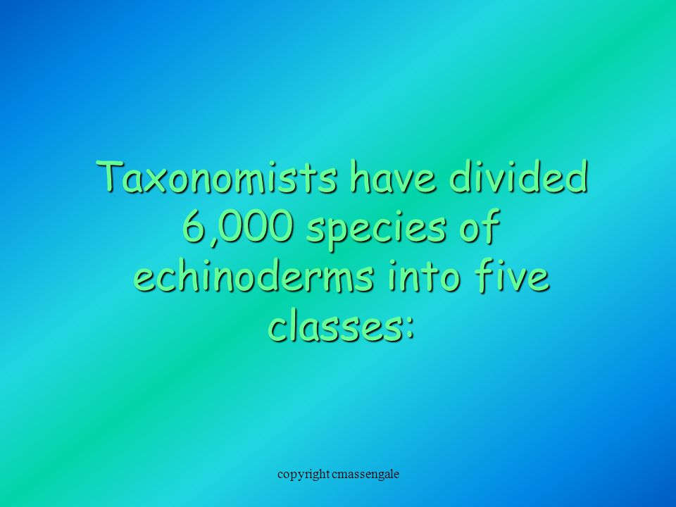 Taxonomists have divided 6,000 species of echinoderms into five classes: copyright cmassengale