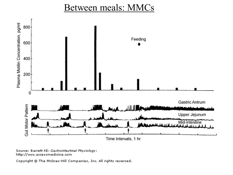 Between meals: MMCs