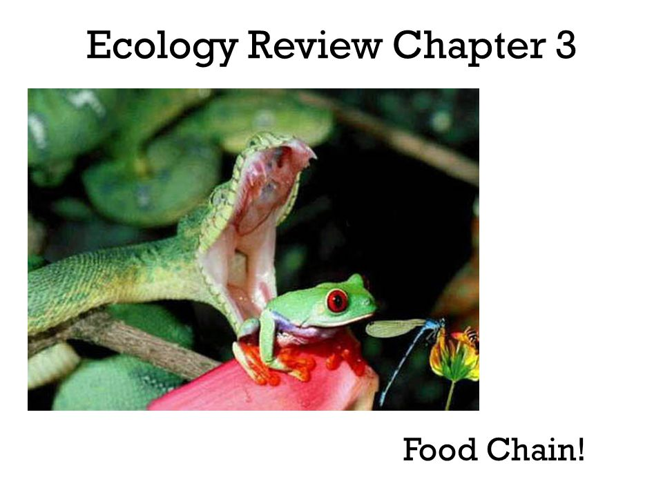 Food chain - chain of organisms along which energy, in the form of food, passes.
