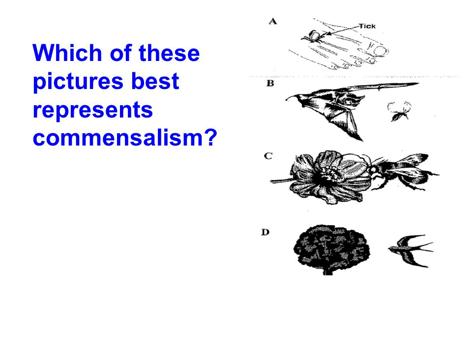 Which of these pictures best represents commensalism