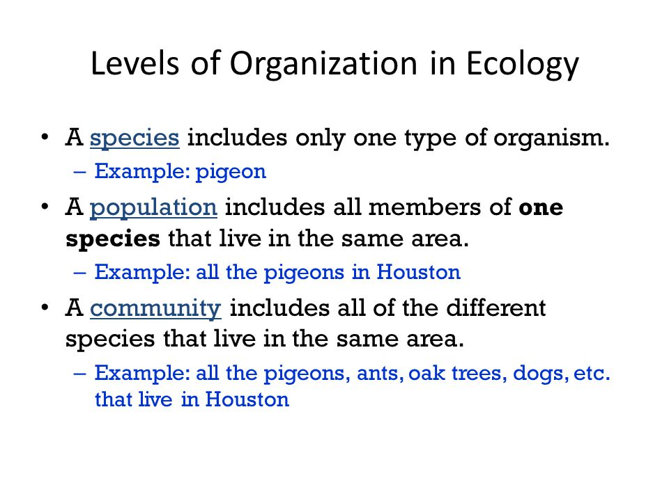 Levels of Organization in Ecology A species includes only one type of organism.