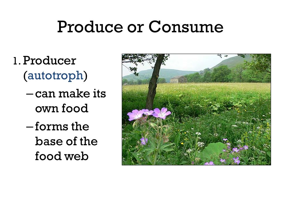 Produce or Consume 1. Producer (autotroph) – can make its own food – forms the base of the food web