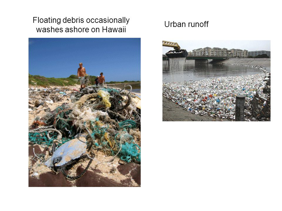 Floating debris occasionally washes ashore on Hawaii Urban runoff
