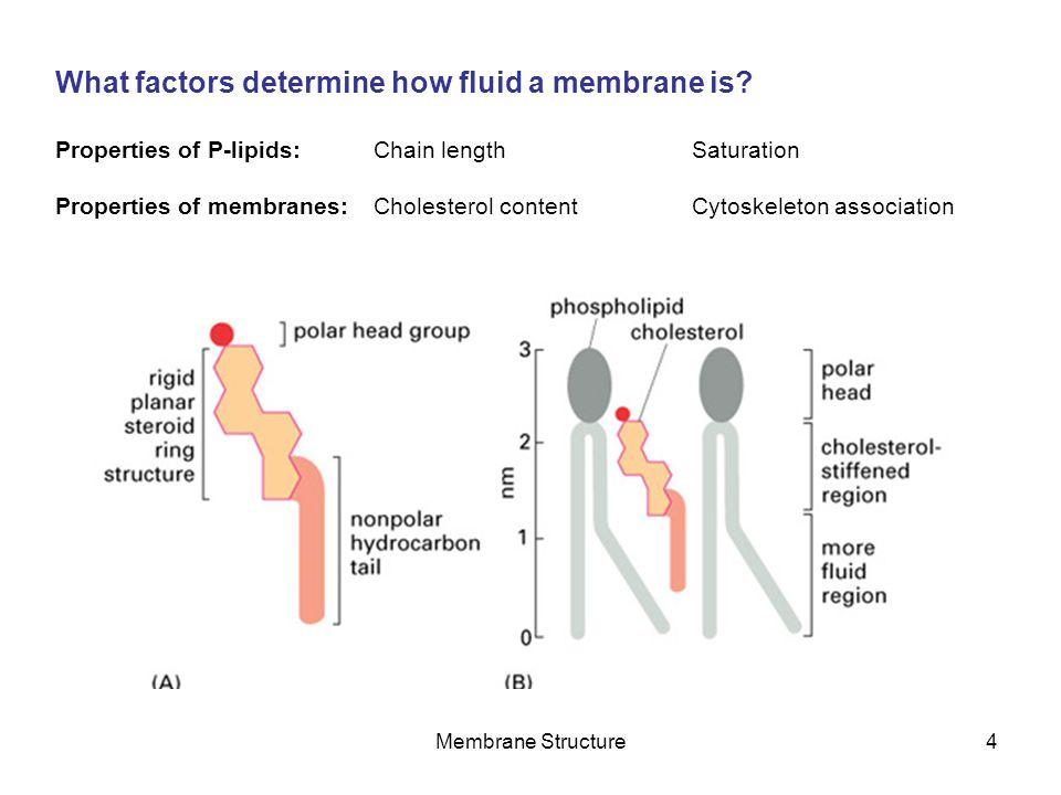 Membrane Structure5 What are the principal membrane lipids.