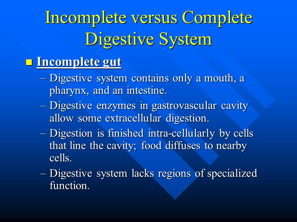 Incomplete versus Complete Digestive System Incomplete gut Incomplete gut –Digestive system contains only a mouth, a pharynx, and an intestine. –Diges