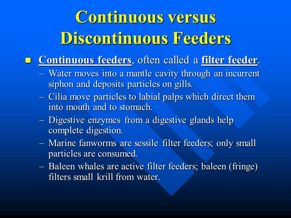Continuous versus Discontinuous Feeders Continuous feeders, often called a filter feeder. Continuous feeders, often called a filter feeder. –Water mov