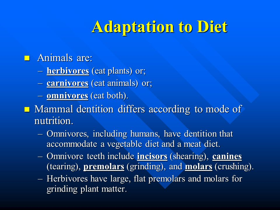 Adaptation to Diet Adaptation to Diet Animals are: Animals are: –herbivores (eat plants) or; –carnivores (eat animals) or; –omnivores (eat both). Mamm