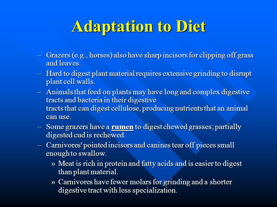 Adaptation to Diet –Grazers (e.g., horses) also have sharp incisors for clipping off grass and leaves. –Hard to digest plant material requires extensi