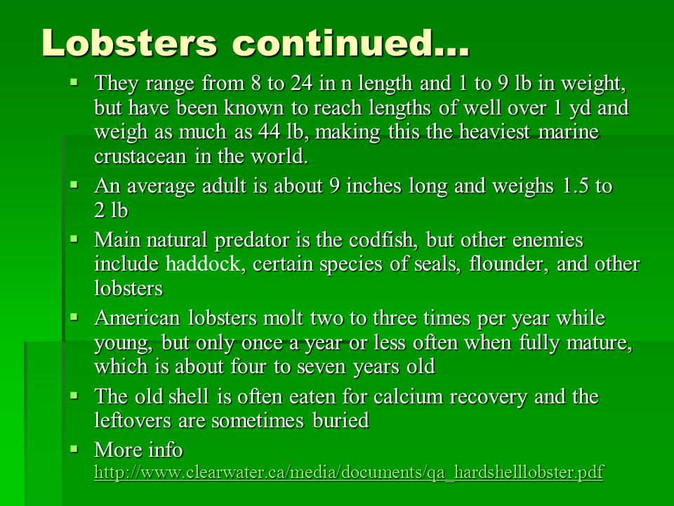 Lobsters continued…  They range from 8 to 24 in n length and 1 to 9 lb in weight, but have been known to reach lengths of well over 1 yd and weigh as much as 44 lb, making this the heaviest marine crustacean in the world.