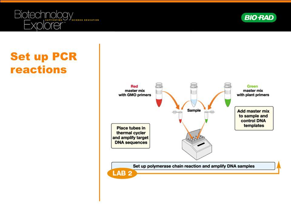 Set up PCR reactions
