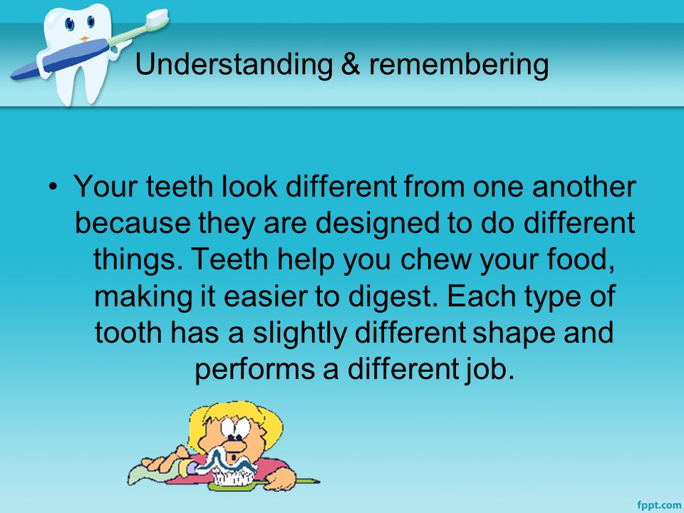 Understanding & remembering Your teeth look different from one another because they are designed to do different things.