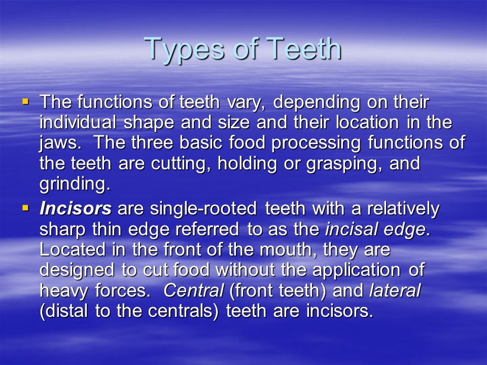 Types of Teeth  The functions of teeth vary, depending on their individual shape and size and their location in the jaws.