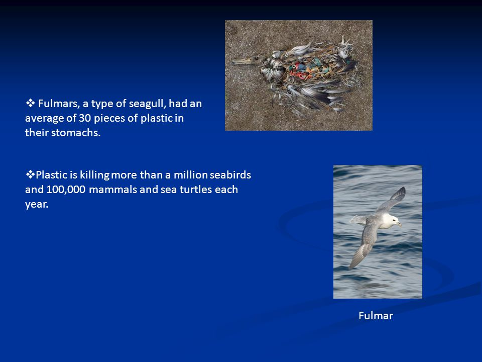  Fulmars, a type of seagull, had an average of 30 pieces of plastic in their stomachs.