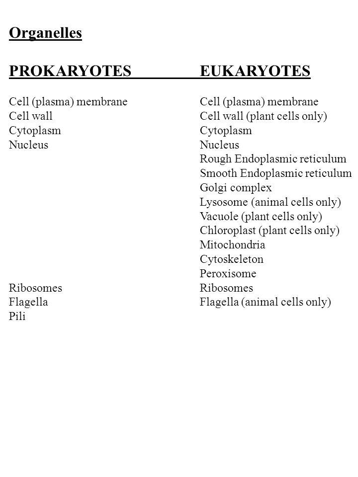 Prokaryotic (bacterial) Cell