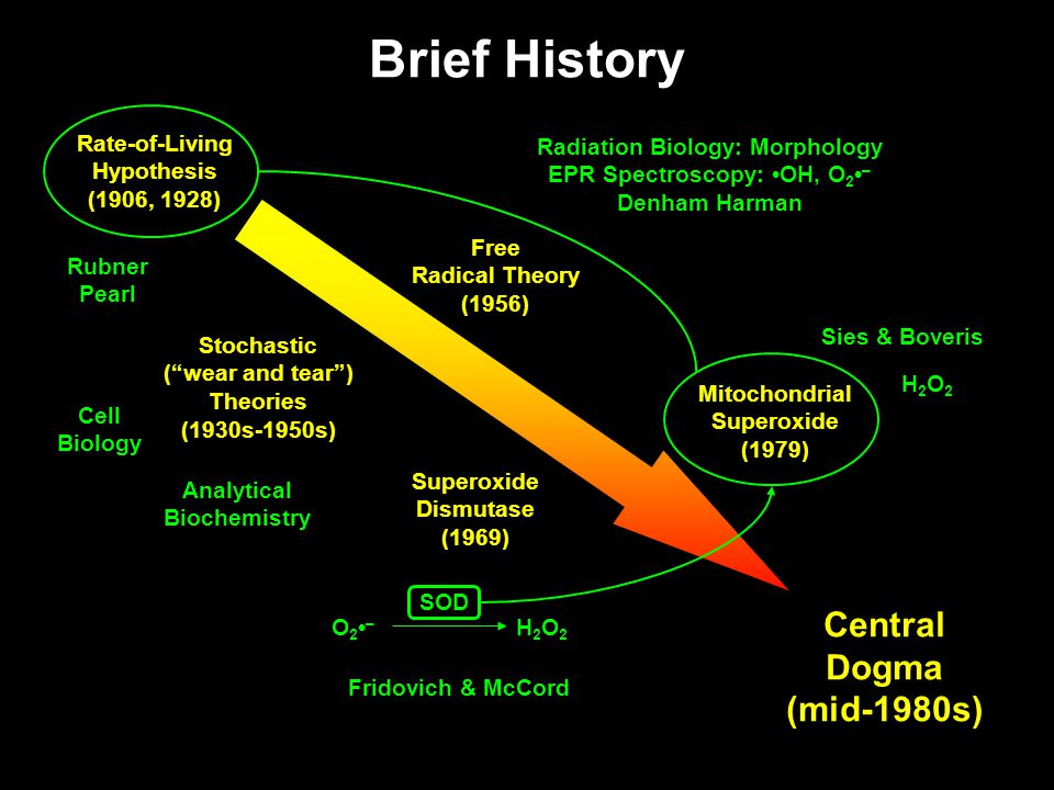 Brief History Free Radical Theory (1956) Superoxide Dismutase (1969) Rate-of-Living Hypothesis (1906, 1928) Mitochondrial Superoxide (1979) Central Dogma (mid-1980s) Rubner Pearl Fridovich & McCord Radiation Biology: Morphology EPR Spectroscopy: OH, O 2 – Denham Harman Sies & Boveris H2O2H2O2 O 2 – H2O2H2O2 SOD Stochastic ( wear and tear ) Theories (1930s-1950s) Analytical Biochemistry Cell Biology