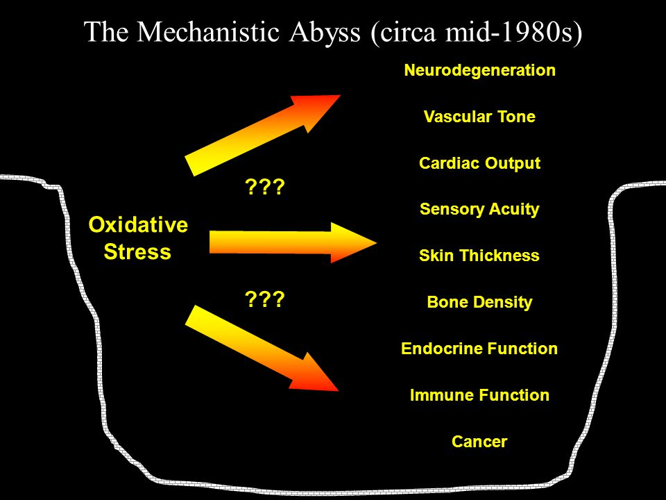 The Mechanistic Abyss (circa mid-1980s) Oxidative Stress Neurodegeneration Cancer Vascular Tone Cardiac Output Sensory Acuity Skin Thickness Bone Density Endocrine Function Immune Function ???