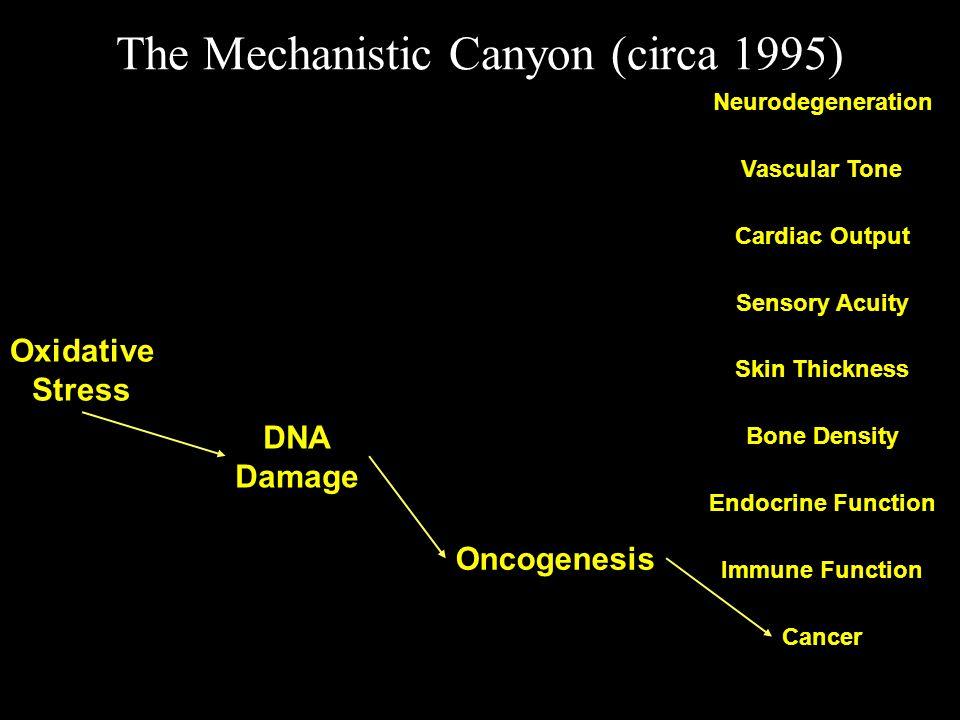 The Mechanistic Canyon (circa 1995) Oxidative Stress Neurodegeneration Cancer Vascular Tone Cardiac Output Sensory Acuity Skin Thickness Bone Density Endocrine Function Immune Function DNA Damage Oncogenesis
