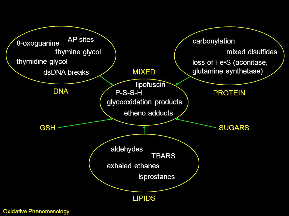 Oxidative Biomarkers DNA 8-oxoguanine thymine glycol thymidine glycol AP sites dsDNA breaks PROTEIN carbonylation mixed disulfides loss of FeS (aconitase, glutamine synthetase) MIXED etheno adducts lipofuscin P-S-S-H glycooxidation products GSHSUGARS LIPIDS aldehydes TBARS exhaled ethanes isprostanes Oxidative Phenomenology