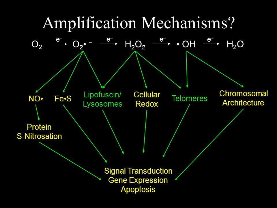 O2 –O2 – O2O2 H2O2H2O2 OH H2OH2O e–e– e–e– e–e– e–e– Amplification Mechanisms.