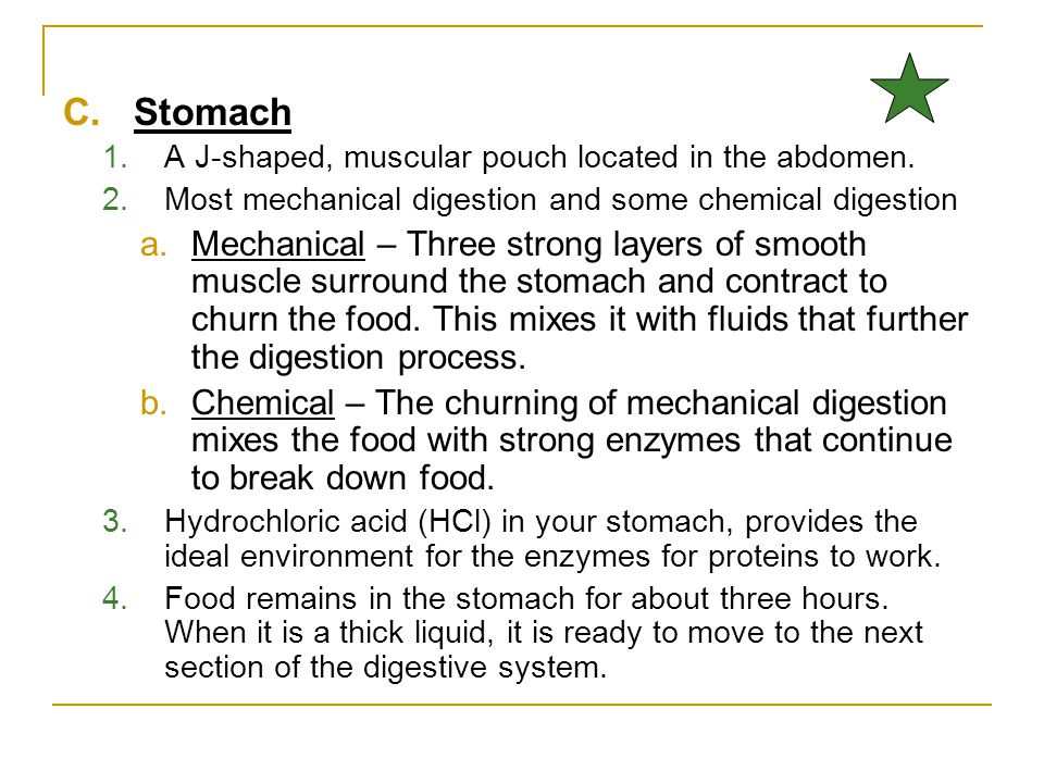 C.Stomach 1.A J-shaped, muscular pouch located in the abdomen. 2.Most mechanical digestion and some chemical digestion a.Mechanical – Three strong lay