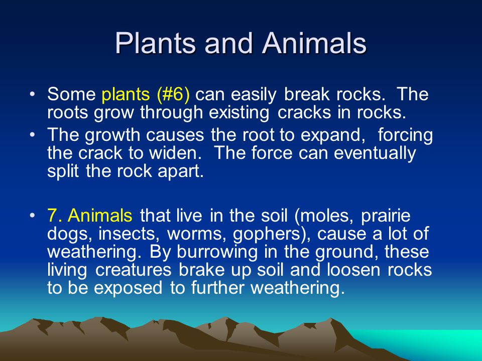 Plants and Animals Some plants (#6) can easily break rocks.