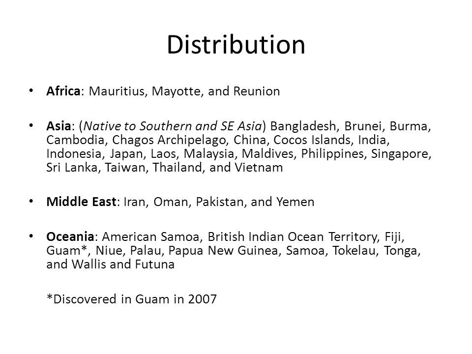 Distribution Africa: Mauritius, Mayotte, and Reunion Asia: (Native to Southern and SE Asia) Bangladesh, Brunei, Burma, Cambodia, Chagos Archipelago, C
