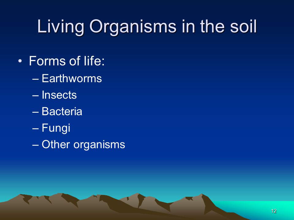 12 Living Organisms in the soil Forms of life: –Earthworms –Insects –Bacteria –Fungi –Other organisms