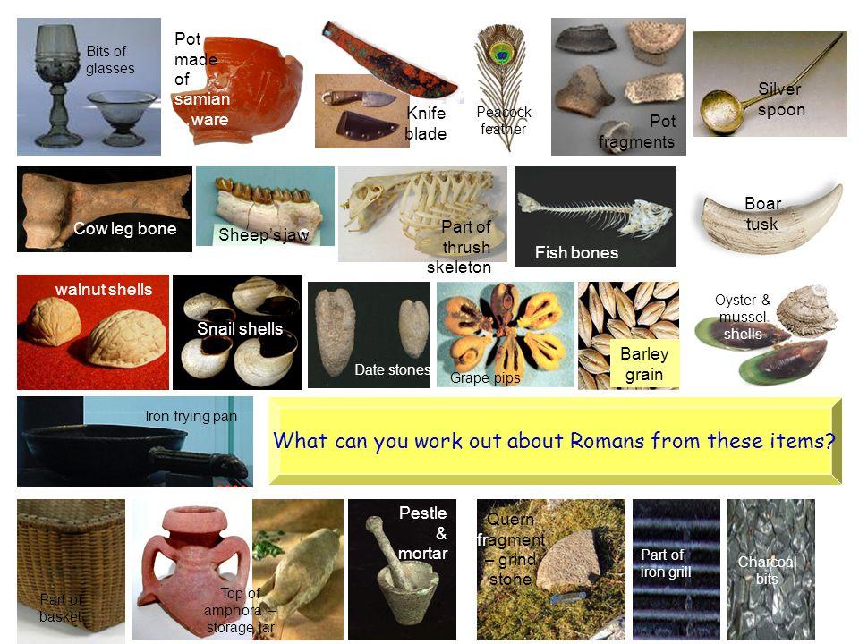 Barley grain Date stones Snail shells walnut shells Grape pips Oyster & mussel shells Boar tusk Fish bones Part of thrush skeleton Sheep's jaw Cow leg