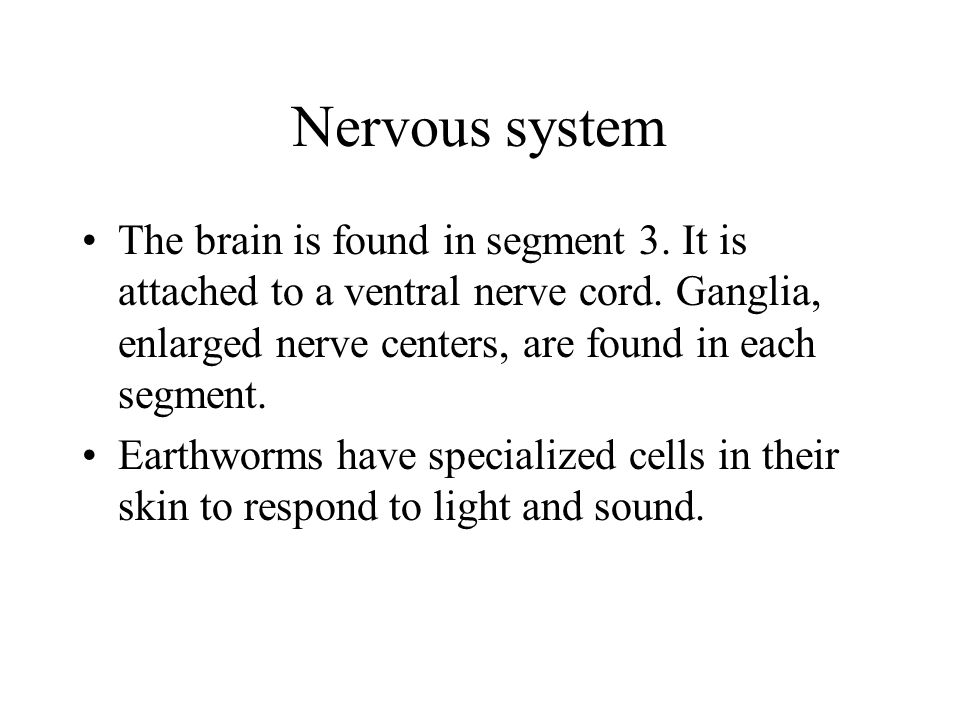 Nervous system The brain is found in segment 3. It is attached to a ventral nerve cord.