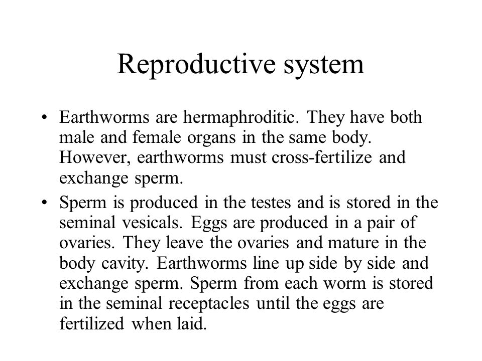 Reproductive system Earthworms are hermaphroditic. They have both male and female organs in the same body. However, earthworms must cross-fertilize an