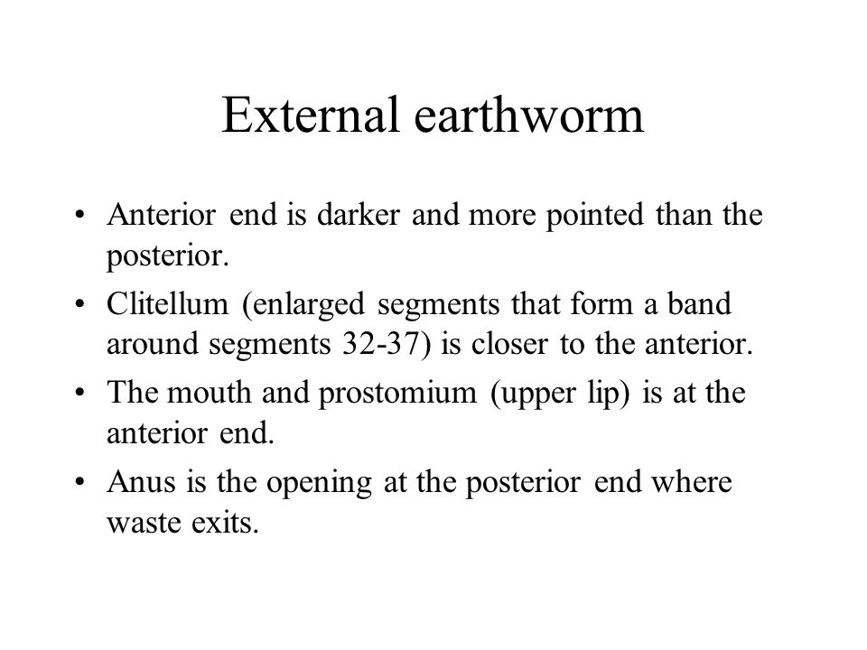 External earthworm Anterior end is darker and more pointed than the posterior.