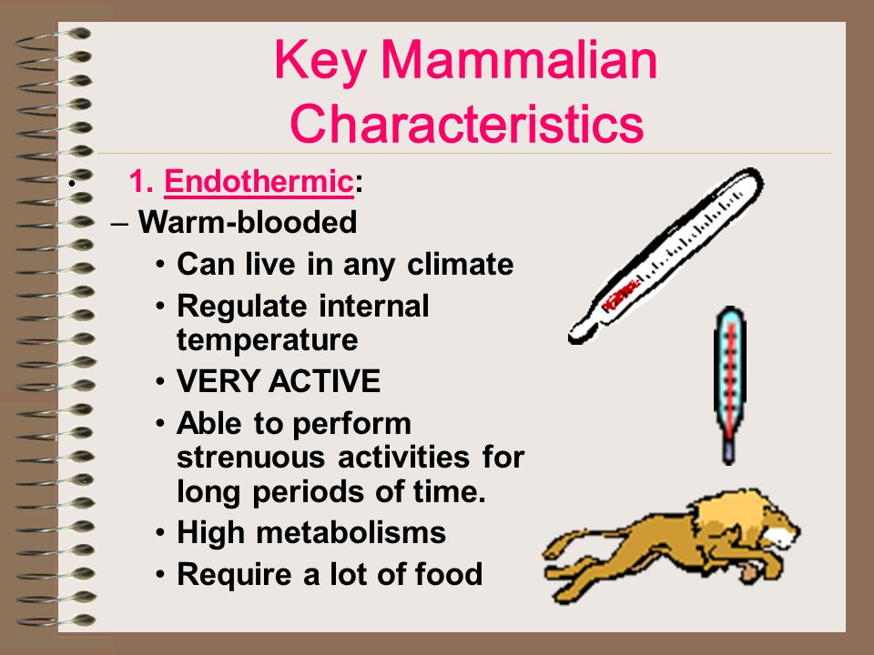 Key Mammalian Characteristics 1.