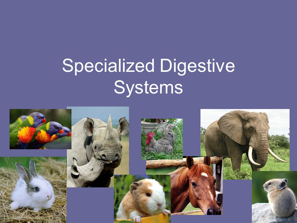 Specialized Digestive Systems