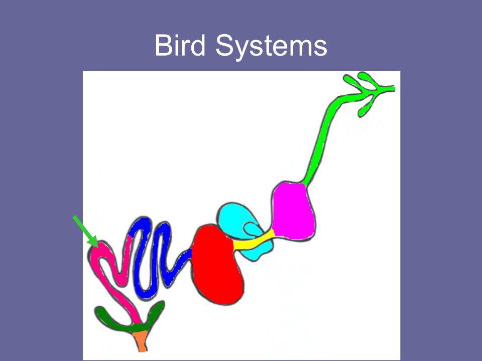 Bird Systems