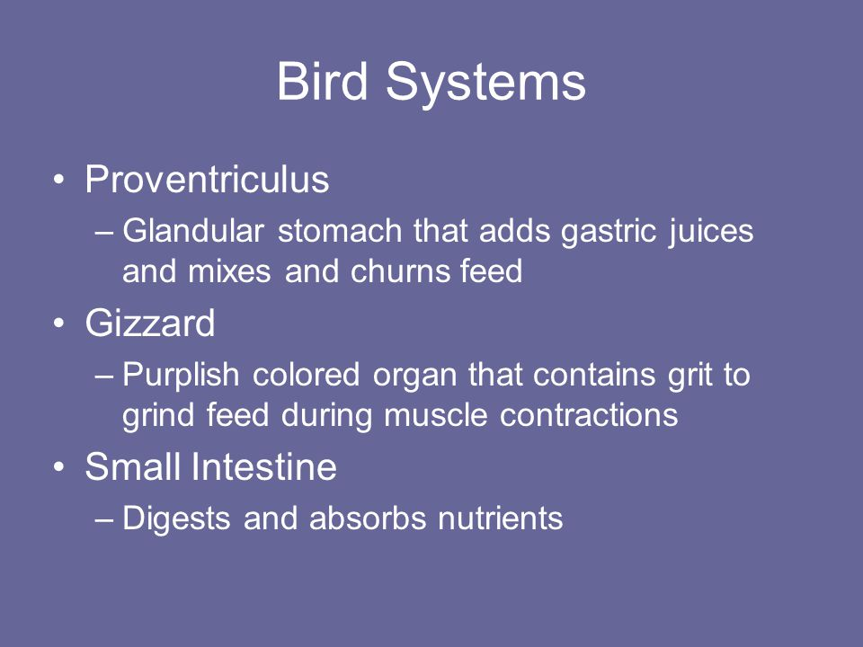 Bird Systems Large Intestine –Absorbs water Ceca –2 blind pouches that do not function at the end of the large intestine Cloaca –Internal sphincter that controls excretion Vent –External sphincter that controls excretion