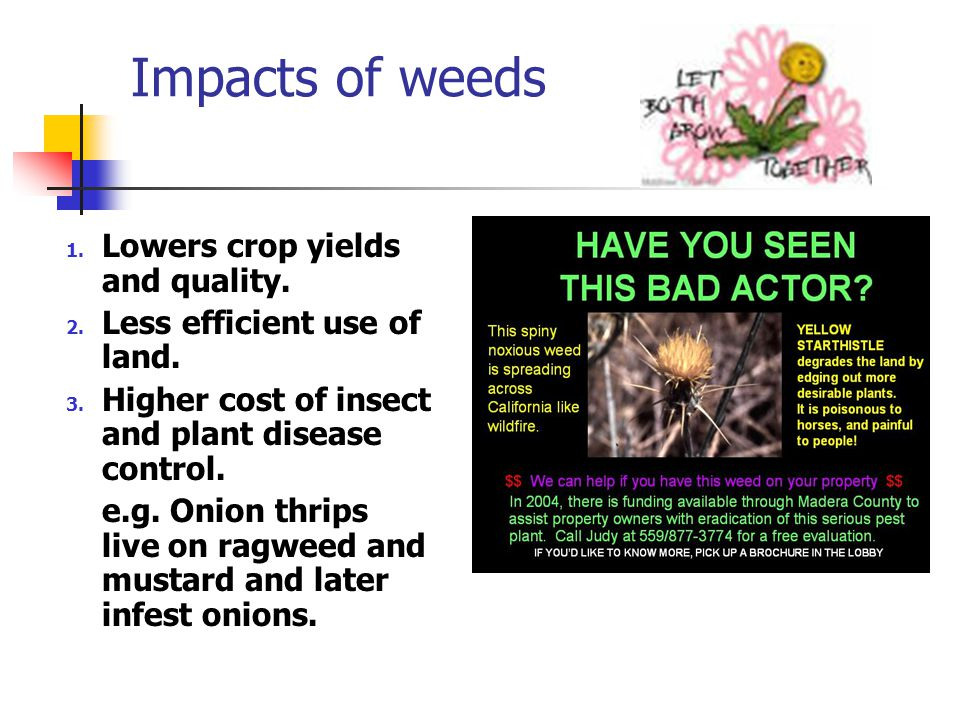 Impacts of weeds 1. Lowers crop yields and quality.
